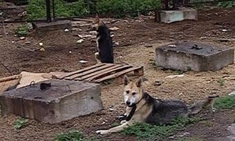 Всех домашних животных возьмут «накарандаш»