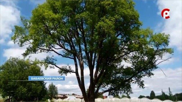 Пятое дерево-памятник живой природы появилось вВологодской области