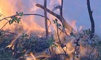Чужие пожары угрожают Вологодчине