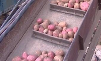 Овощи вэтом году будут дешевле