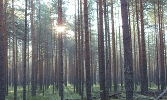 Мурманчанин 18дней плутал ввологодских лесах ипохудел на20килограмм