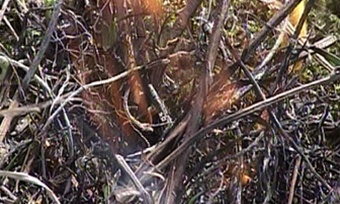 Два лесных пожара удалось потушить вЧереповецком районе